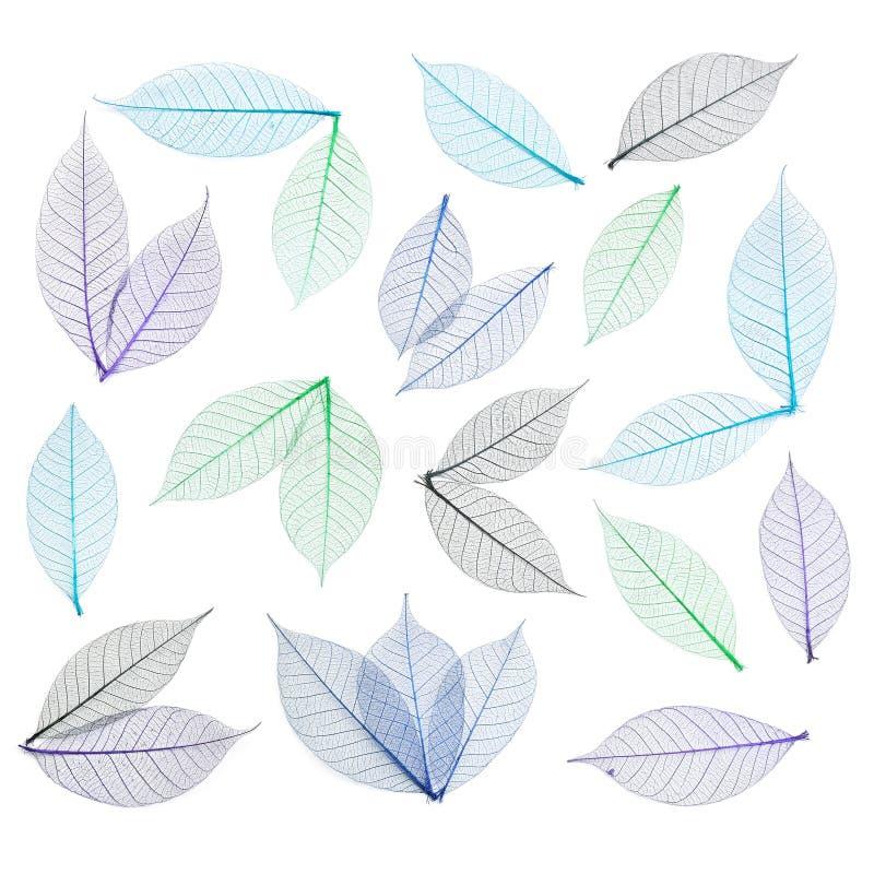 抽象背景叶子概要 免版税库存图片