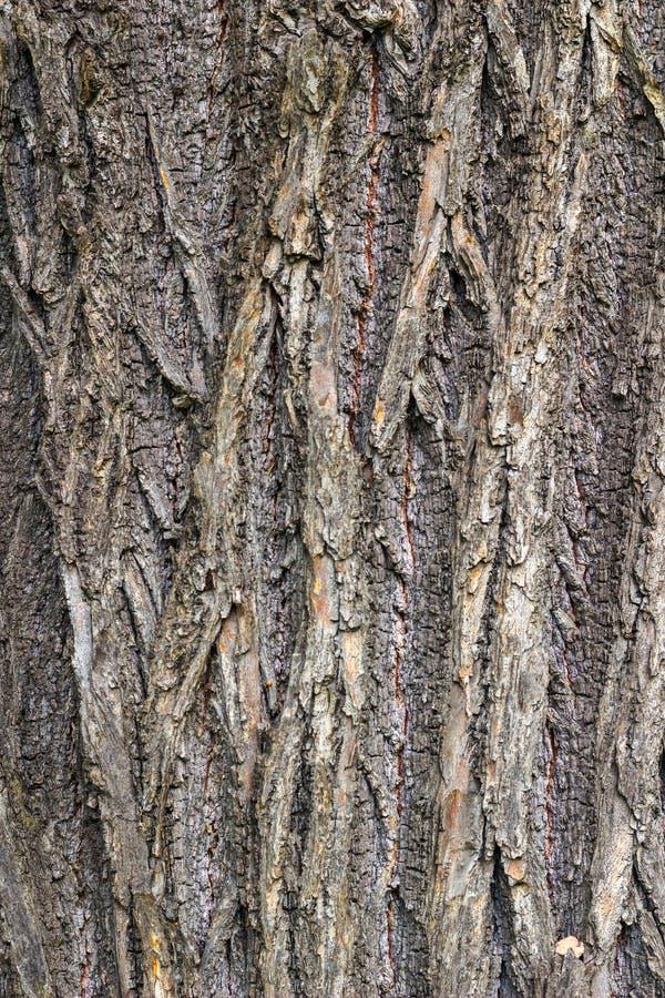 抽象背景吠声设计橡树 图库摄影