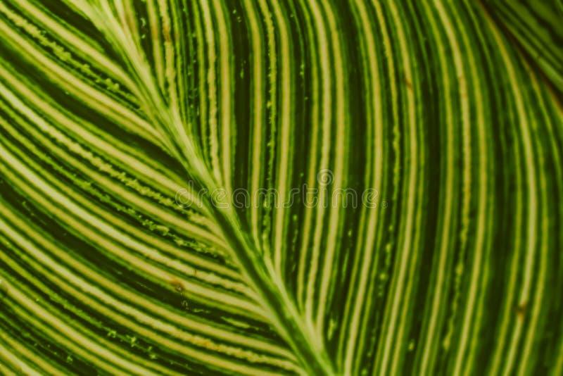 抽象背景墙纸的迷离绿色叶子美好的纹理 免版税库存照片
