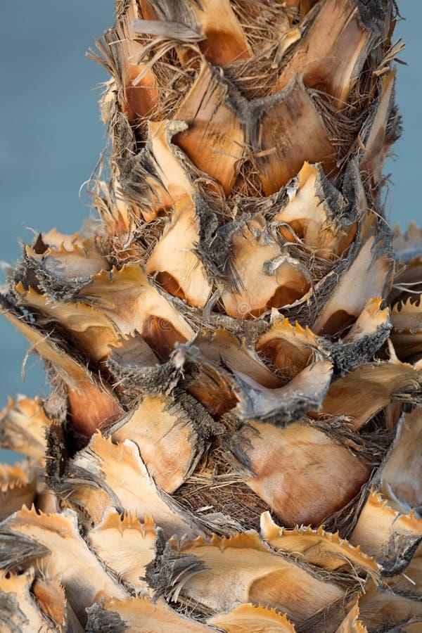 抽象背景详细资料掌上型计算机纹理树干木头 免版税库存图片