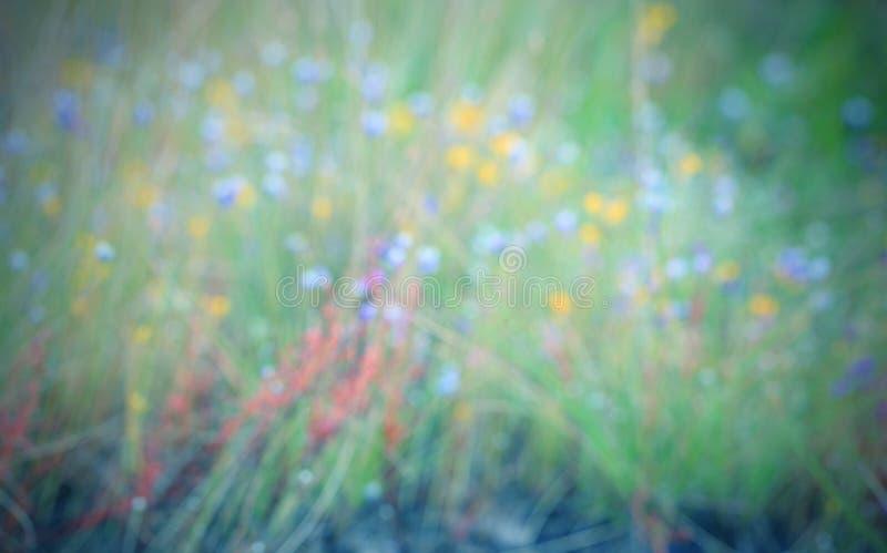 抽象背景迷离 五颜六色的花和绿色叶子迷离 免版税库存图片