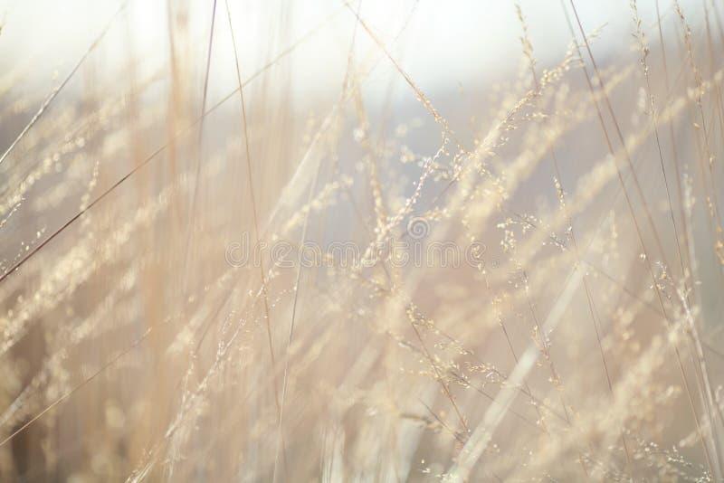 抽象背景:自然秋天草 免版税库存图片