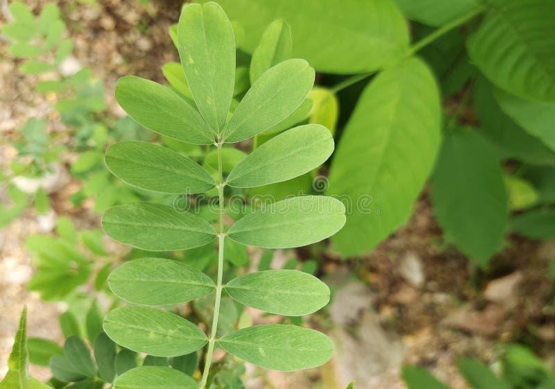 抽象自然叶子绿色纹理背景 库存照片