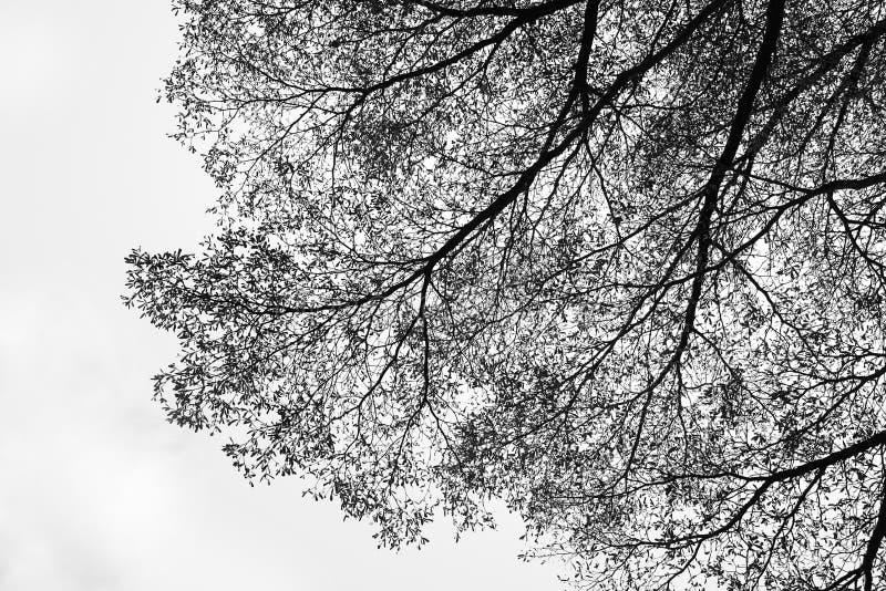 抽象自然树纹理 皇族释放例证
