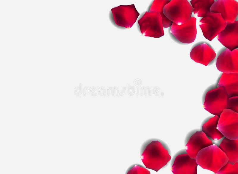 抽象自然玫瑰花瓣o背景现实传染媒介例证 库存例证