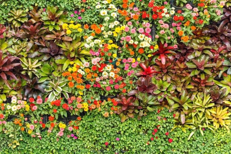 抽象自然背景,墙壁庭院 库存图片