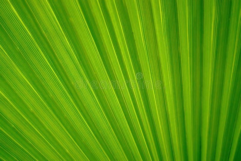 抽象花卉背景-棕榈的叶子的片段 免版税库存图片
