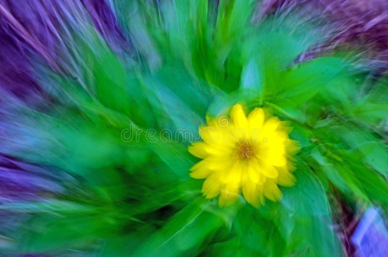 抽象花黄色 库存照片