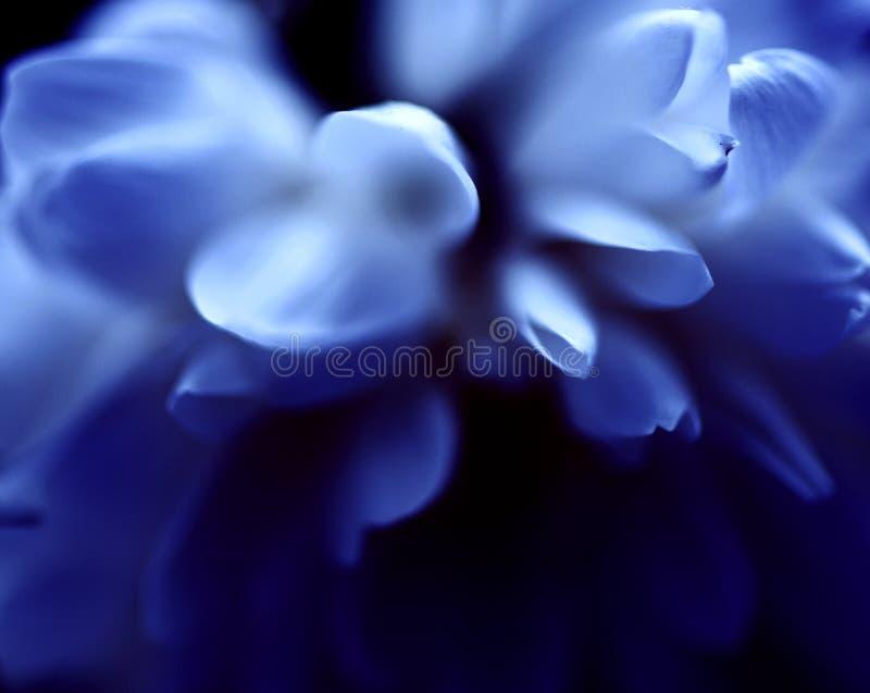 抽象蓝色嫩花背景 库存照片