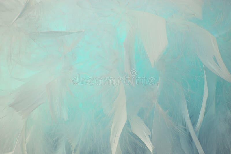 抽象蓝色小野鸭口气羽毛背景 蓬松羽毛时尚设计葡萄酒漂泊样式柔和的淡色彩纹理 皇族释放例证
