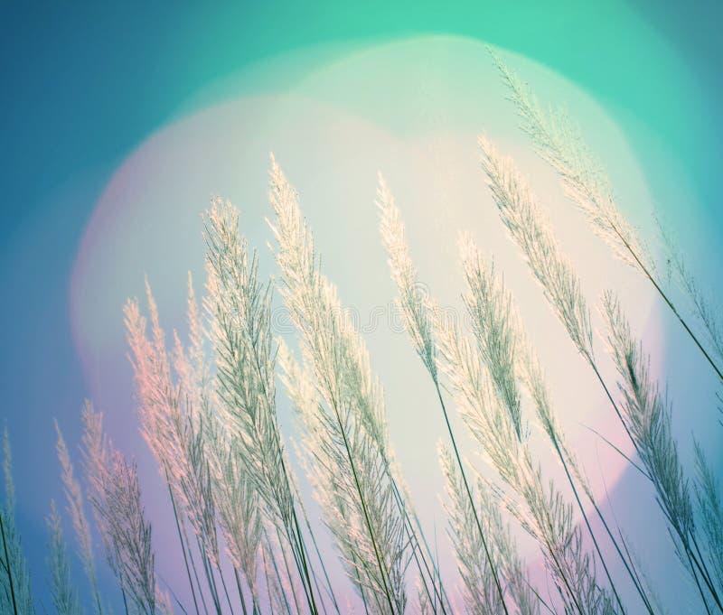 抽象蓝色照明设备软性针茅背景 库存图片