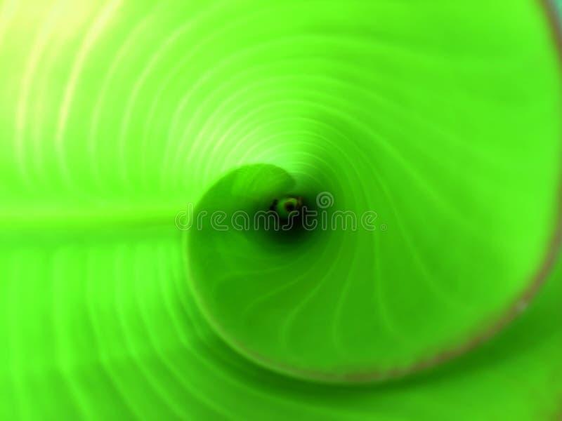 抽象螺旋热带 免版税库存图片