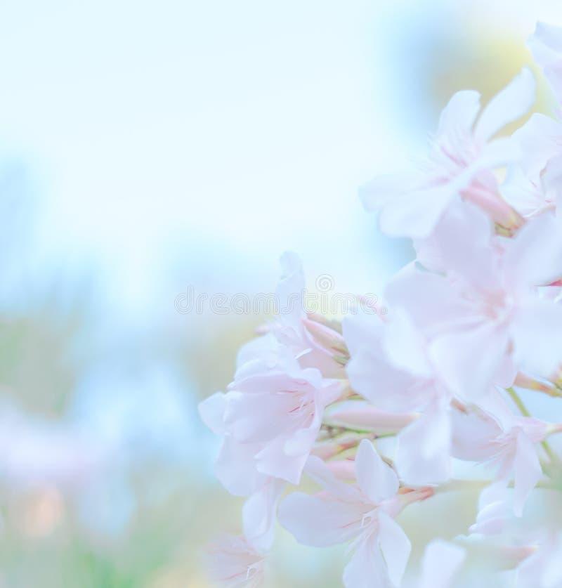 抽象软的甜桃红色花背景 库存图片