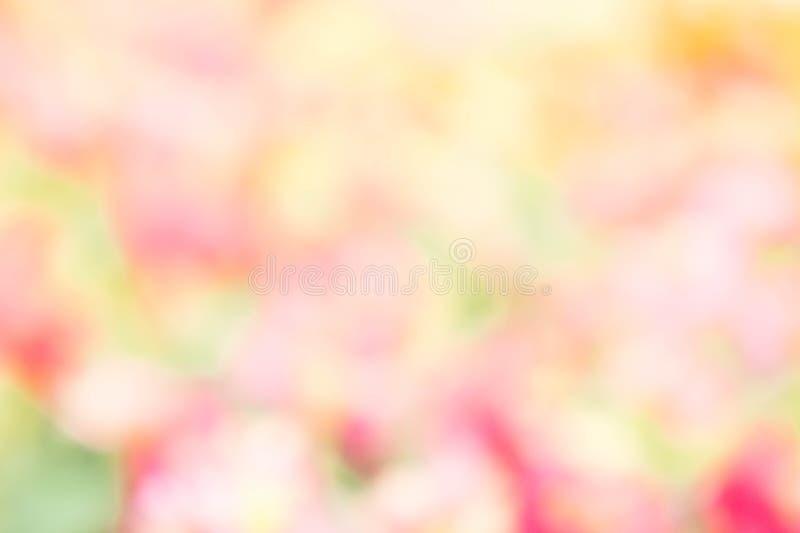 抽象迷离颜色自然花室外样式背景yello 免版税库存图片