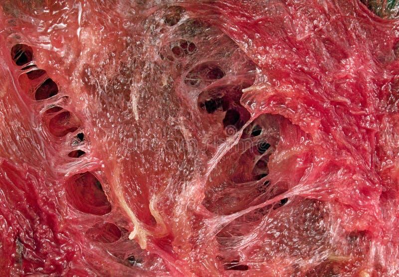 抽象骨肉红色 免版税库存图片