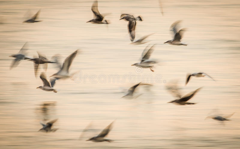 抽象鸟飞行速度运动 免版税库存图片
