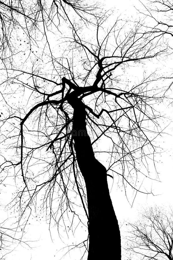 抽象黑色蠕动的结构树白色 库存图片