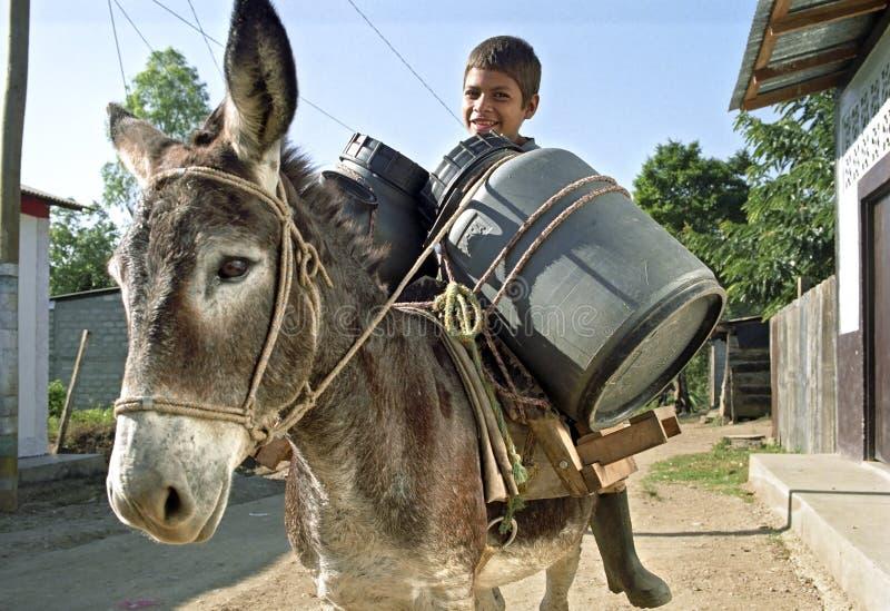 拉丁美州的男孩运输在驴的水 免版税库存照片