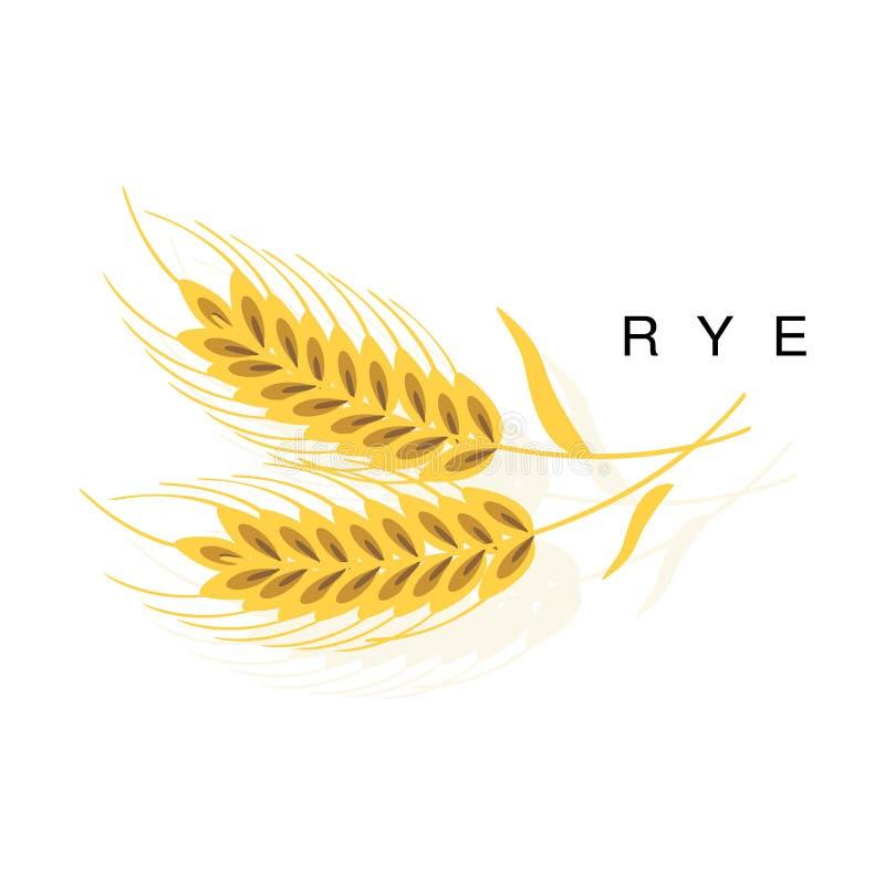 拉伊耳朵、Infographic例证与现实谷物庄稼和它的名字 库存例证