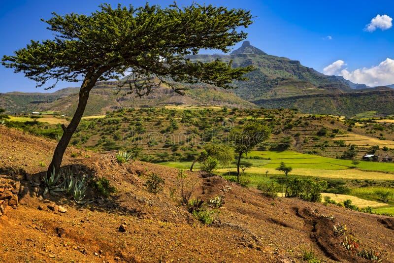 拉利贝拉乡下,埃塞俄比亚 免版税库存照片