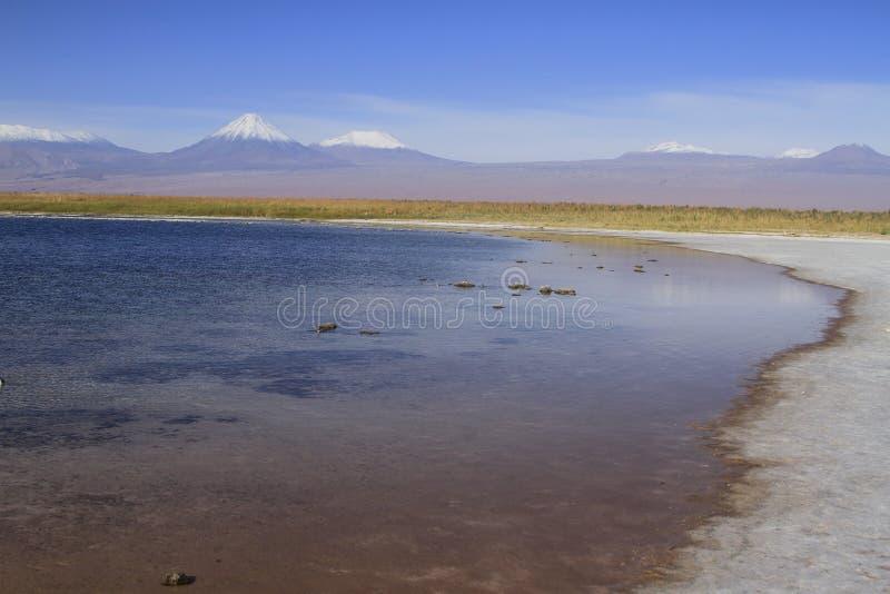 拉古纳Cejar,阿塔卡马,智利 免版税库存照片