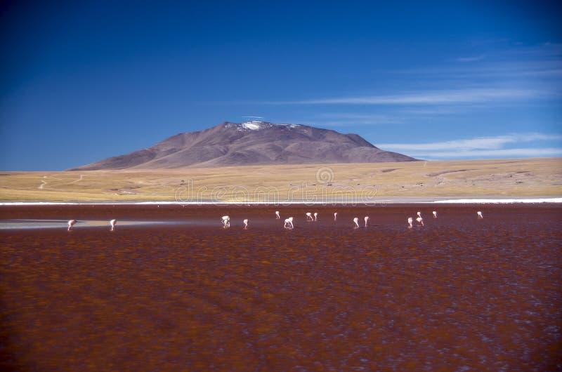 拉古纳Colorada在山脉de Lipez,玻利维亚 免版税库存图片