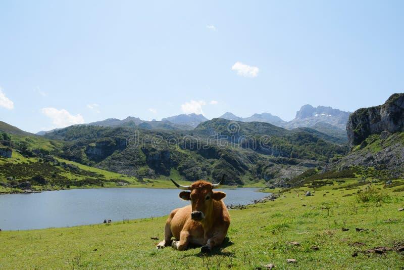 拉各斯de Covadonga 图库摄影