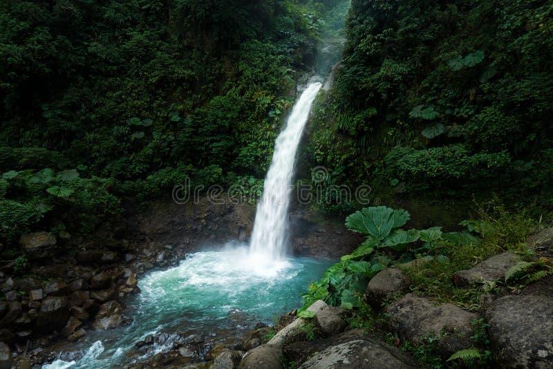 拉巴斯瀑布在阿拉胡埃拉,哥斯达黎加的早晨场面 免版税库存图片