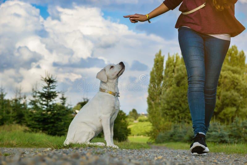 年轻拉布拉多狗小狗和妇女一起训练 免版税图库摄影