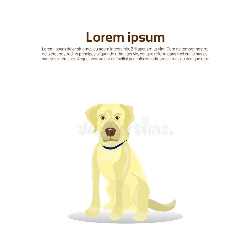 拉布拉多猎犬在与拷贝空间的白色背景隔绝的狗象 向量例证