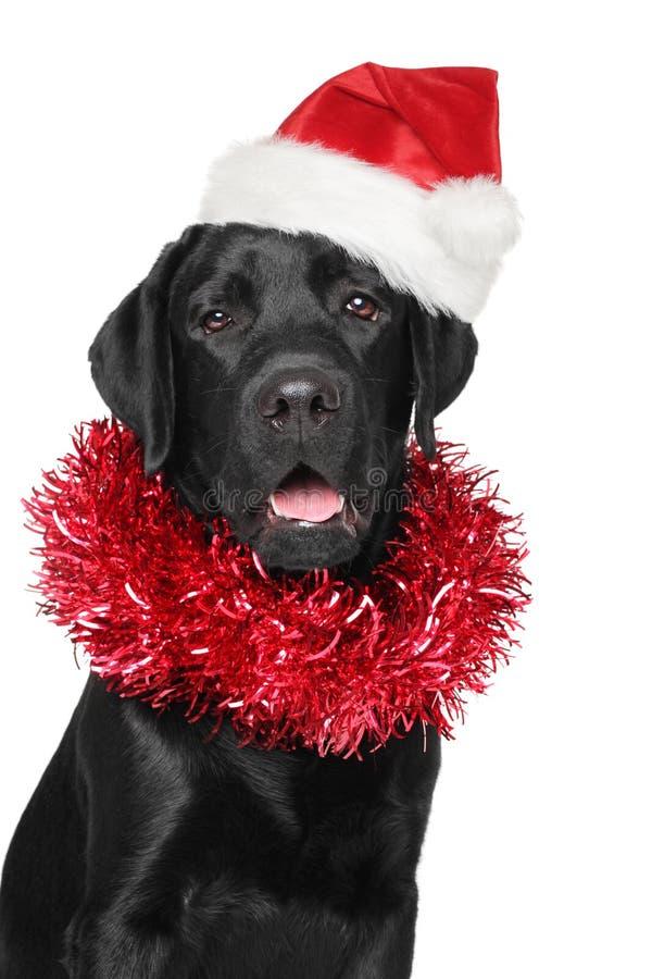 黑拉布拉多猎犬在圣诞老人圣诞节红色帽子 免版税库存照片