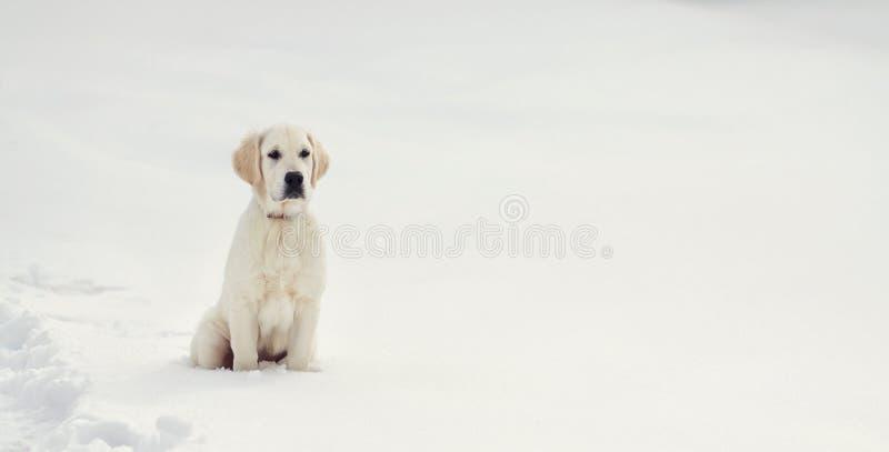 拉布拉多猎犬小狗在冬天 免版税库存照片