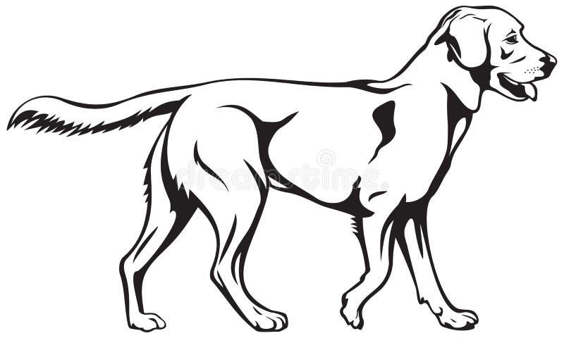 拉布拉多猎犬狗品种 库存例证