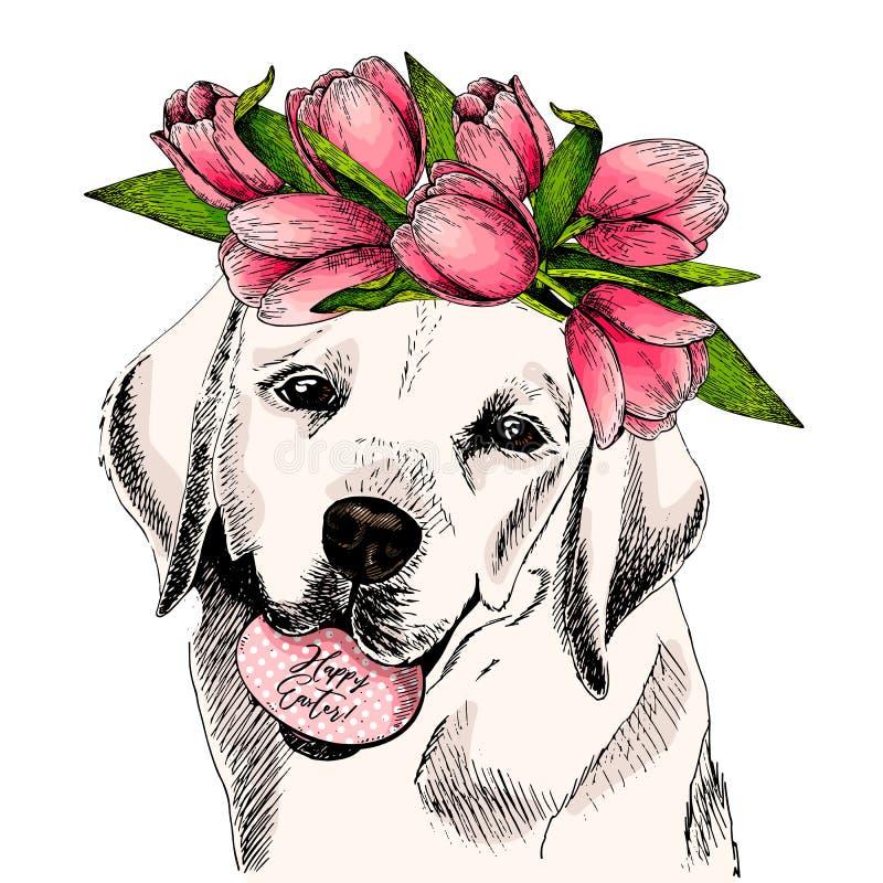 拉布拉多猎犬狗画象用鸡蛋和郁金香加冠 愉快的复活节 手拉的色的传染媒介例证 向量例证