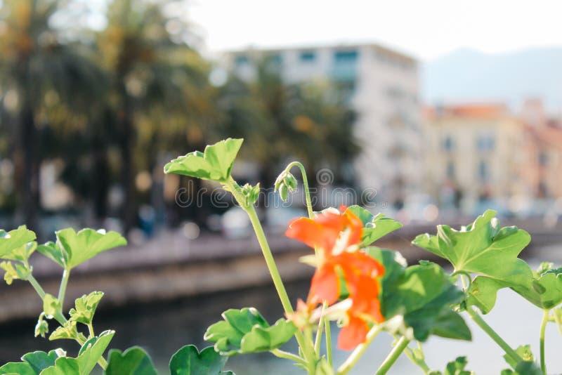 拉帕洛,意大利- 03 27 2013年:度假胜地拉帕洛的街道的看法 免版税库存照片
