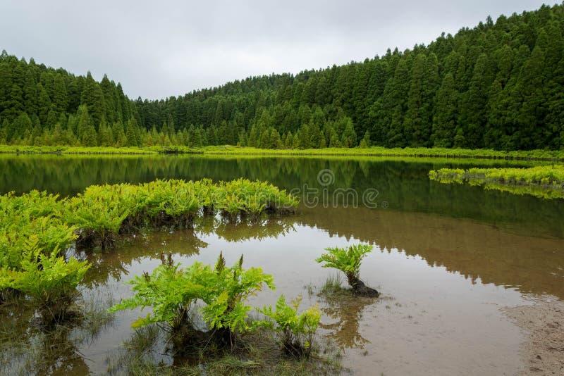 拉戈阿做Canári黄雀色盐水湖,有反射、水生绿色植物和树的 库存图片