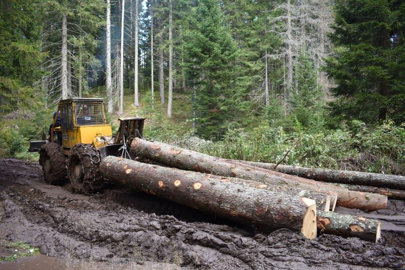 拉扯木材的集材工通过泥泞的路 免版税库存照片