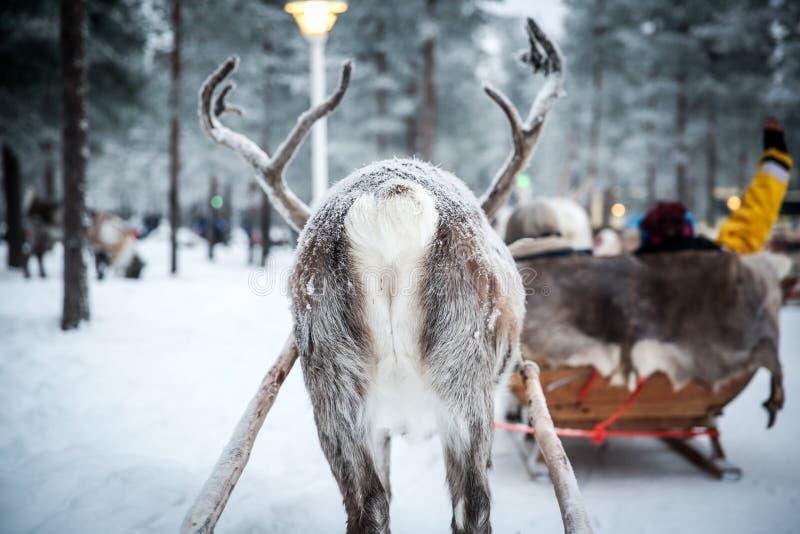 拉扯雪撬的驯鹿的靶垛 免版税库存图片