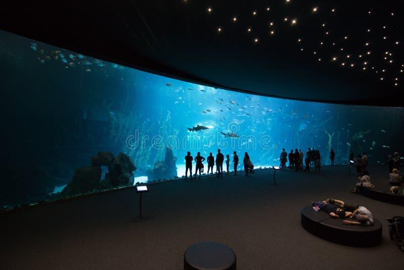 拉斯帕尔马斯de大加那利岛,西班牙- 2018年12月28日:访客在欧洲享受海洋生物美丽的景色在最大的坦克的 免版税库存图片