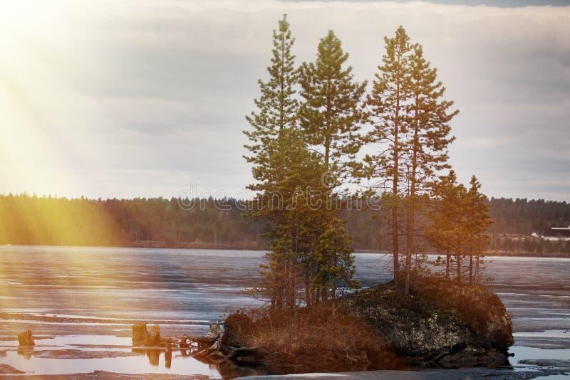 拉普兰森林湖与春日的阳光 免版税库存照片