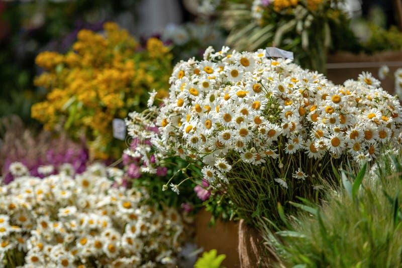 拉脱维亚里加 花束与另外夏天在莱戈开花 库存照片