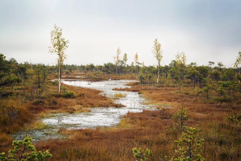 拉脱维亚 在沼泽Kemeri的美好的颜色 免版税库存照片