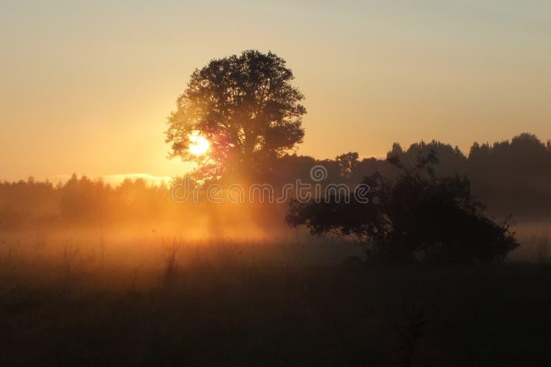 拉脱维亚卢巴纳领域太阳集合 免版税库存图片