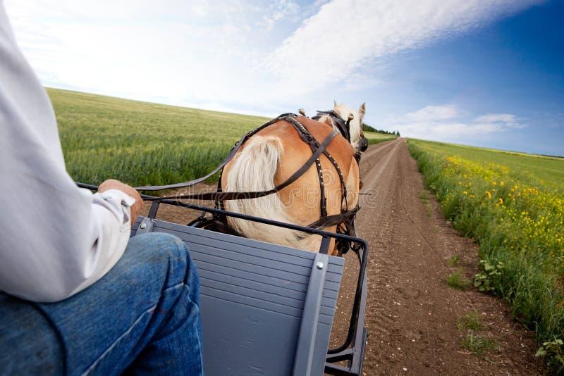 拉货车的马 免版税图库摄影