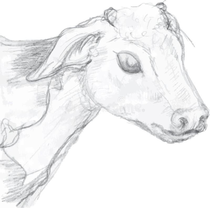 拉长的小牛头 向量例证