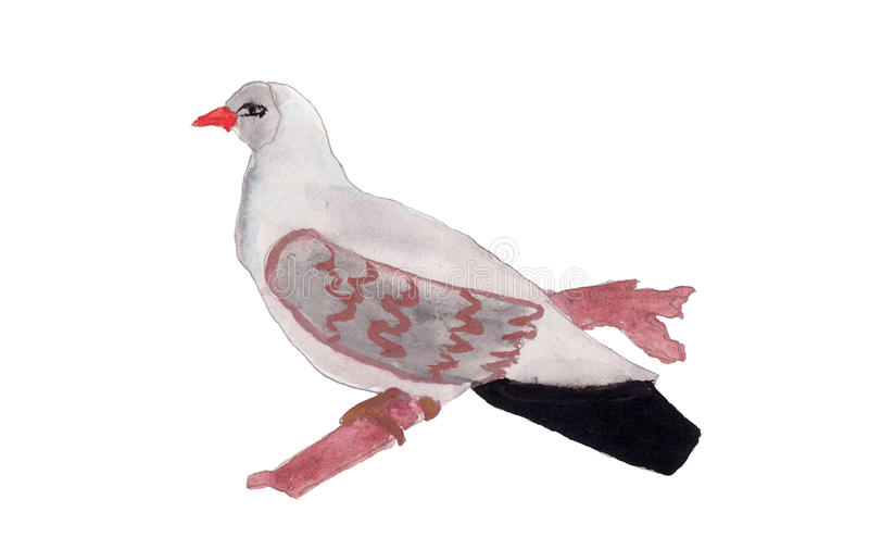 拉长的鸽子 库存图片