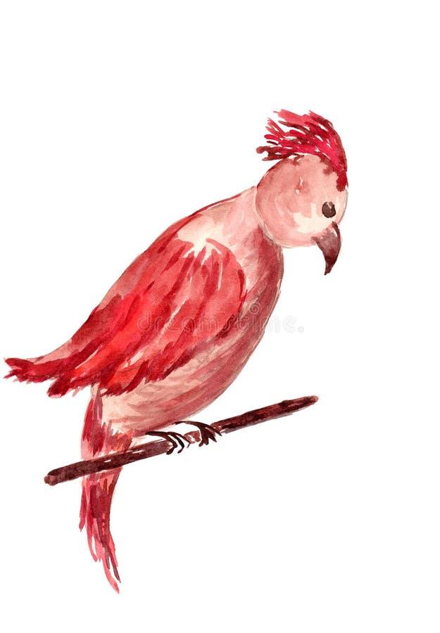 拉长的鹦鹉 免版税库存照片