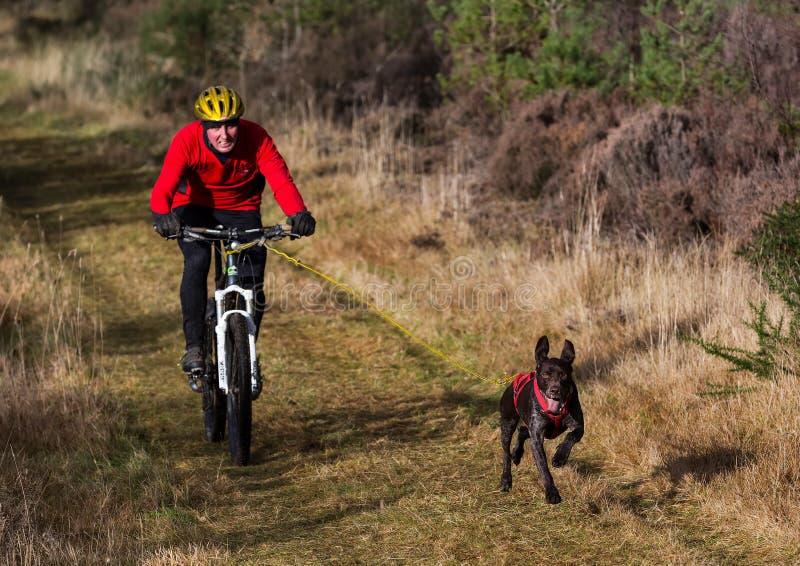 拉雪橇狗协会苏格兰,种族参加者。 库存图片