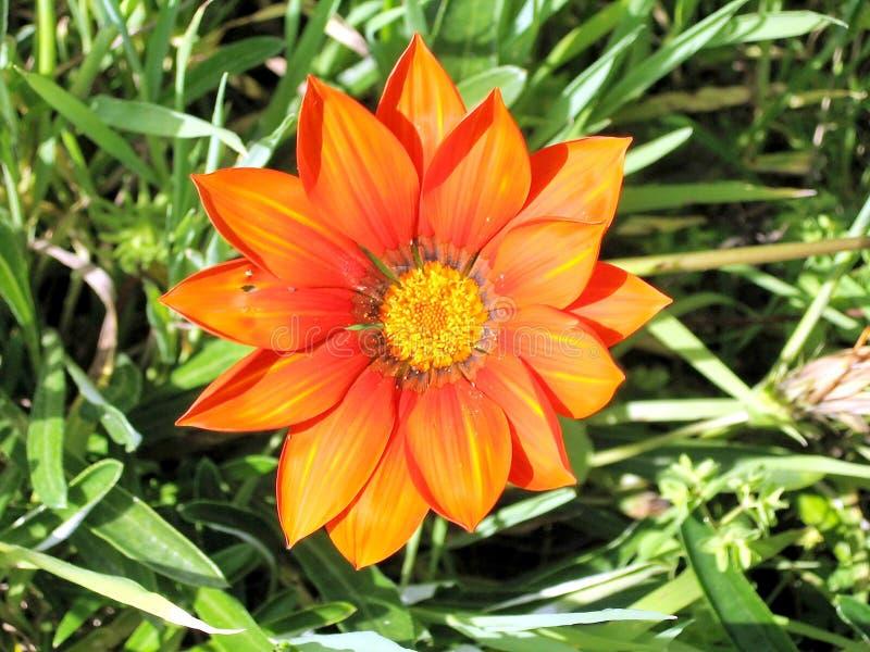 Download 拉马干公园杂色菊属植物2007年 库存照片. 图片 包括有 鸦片, 红色, 永恒, 橙色, 背包, 绿色 - 59103784