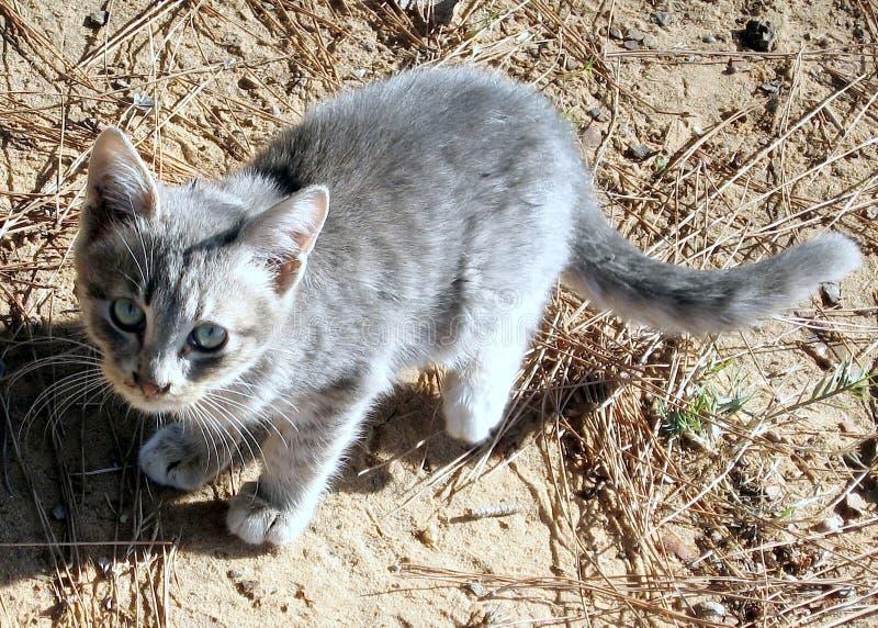 Download 拉马干公园猫2007年 库存照片. 图片 包括有 北部, 公园, 亲切, 永恒, 背包, 以色列, 灰色 - 59103292